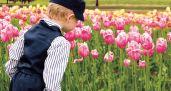 tulip boy