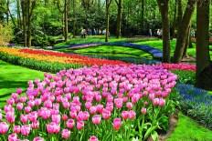 TulipTime_ss_73779124_Keukenhof_Holland_gallery
